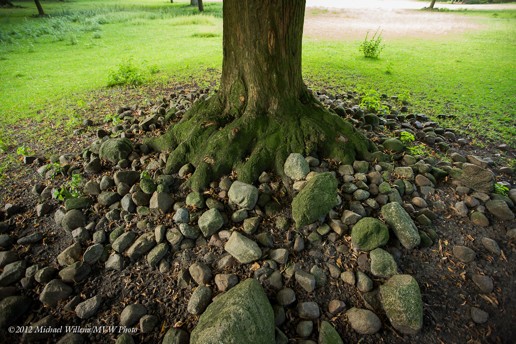 Tree in Netherlands (Photo: Michael Willems)