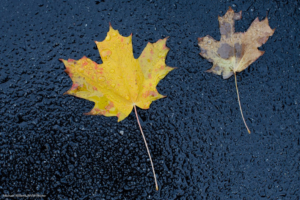 Fall - Photo: Michael Willems