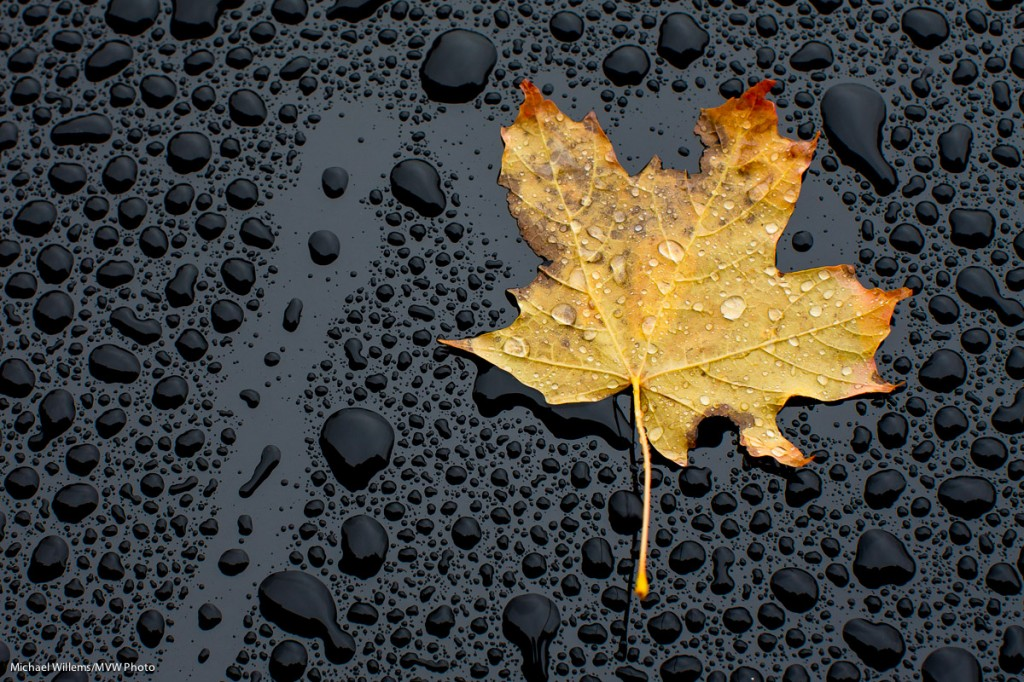 maple Leaf on Mercedes (©2012 Michael Willems)