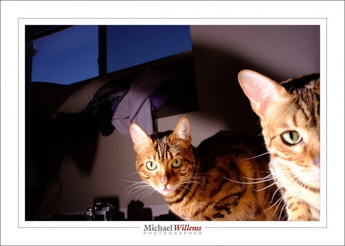 Cats with a Fujicolor x100 - Photo Michael Willems